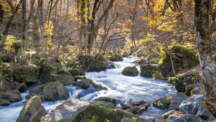 Mysterious Oirase Stream flowing through the autumn forest in To