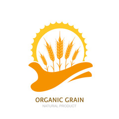 Human hand holding wheat ears and sun. Vector logo, label, package design elements. Barley, or rye illustration. Concept for agriculture, organic cereal products, harvesting grain and farming.