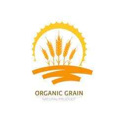 Wheat, barley, or rye ears, field and sun. Vector logo, label, package design elements. Concept for agriculture, organic cereal products, harvesting grain and farming. Healthy food symbol.