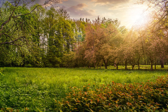 lawn in garden with fruit trees at sunset