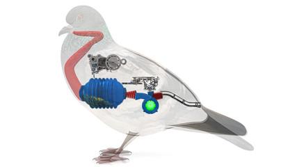 Uccello, anatomia interna, digestione, stomaco, intestino, funzionamento,