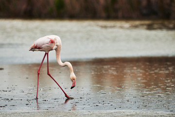 Lonely Pink Flamingo