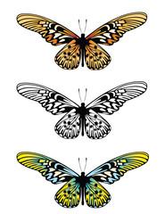 Butterfly long wing