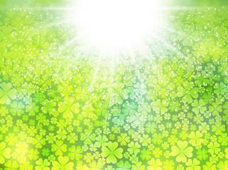 クローバー 草 新緑 背景