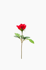 red rose flower, beautiful plastic rose flower.