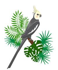 Parrots Cartoon Vector Illustration. Parrot set Exotic birds