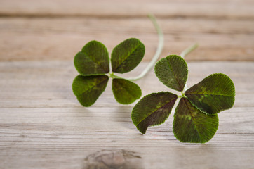 two four-leaves clovers for good luck isolated on wooden backgro