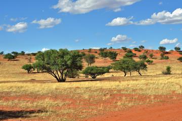 Fototapete - Kalahari desert, Namibia
