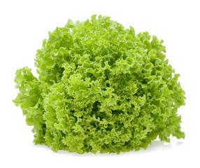 Green oak lettuce leaf isolated on white background