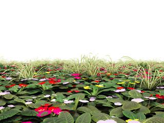 Blumenwiese isoliert auf weißem Hintergrund
