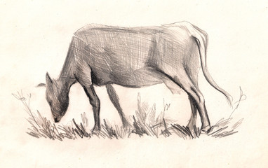 Cow . Sketch. hand painted Pencil drawing