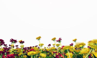 Blumenwiese - Freisteller