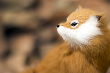 Portrait of a red fox [blur and select focus background]