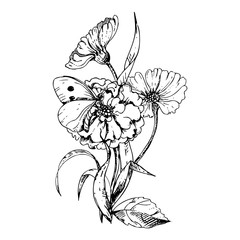 hand drawn ink floral ornament with flowers marigolds and cosmos on white background. butterfly on a flower.