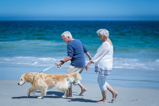 Cute mature couple holding hands walking the dog