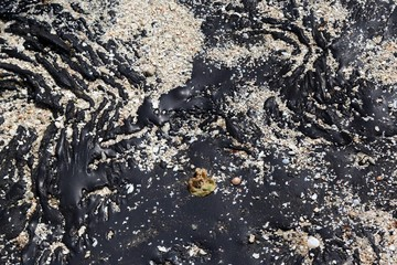 Oil Spill contaminating beach