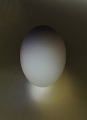 one white egg obscured object on a dark background isolated