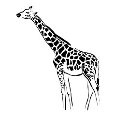 Outline giraffe vector image. Can be use for logo