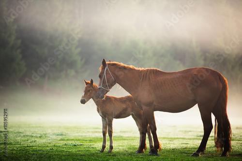 Коричневые лошади у дерева бесплатно