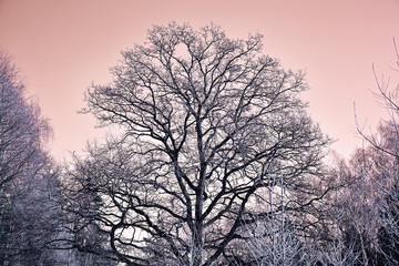 beautiful tree in freezing weather in the woods