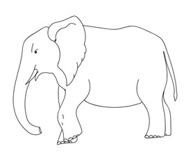vector outline illustration of elephant