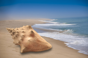 Large conch seashell on sandy beach with ocean background