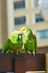 Couple of parrots on a branch