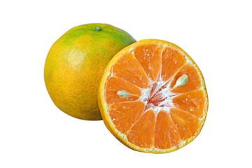 Orange honeysuckle species