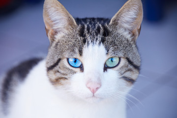 beautiful add eyes cat