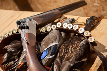 Hunting shotgun shells and a duck