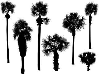 six palm silhouettes isolated on white