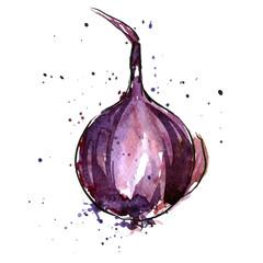 vector watercolor purple onion bulb