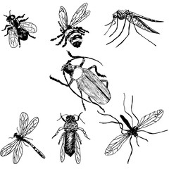 Hand-drawn insects. Bee, fly, mosquito, hook, dragonfly, wasp