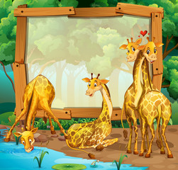 Frame design with giraffes in the jungle