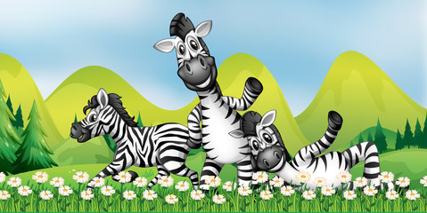 Three zebras in the flower field