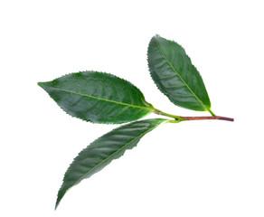tea  leaves  on  the  white  ground