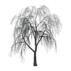 Willow on White
