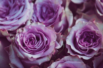 Purple rose flower bouquet vintage background, close up of wedding bouquet