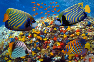 Tropical fish and corals in the Red Sea