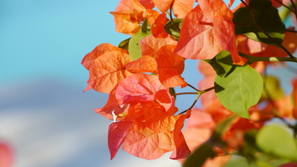 Flower in Samaná