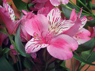 Alstroemeria flowers bouquet