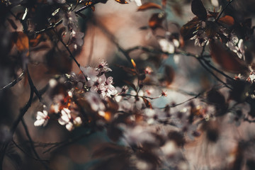 Colorful photo of wild tree blossoms on natural light and with selective focus. Short depth of field for dreamy soft background.