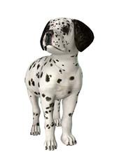 Dalmatian Puppy on White