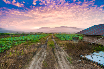 Rural soil path in green farm landscape sunrise.