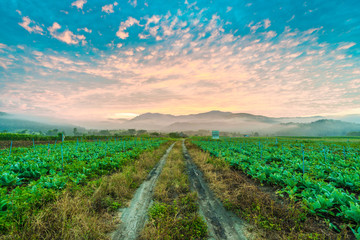 Rural soil path in green farm landscape sunrise.