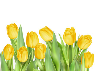Tulip flowers isolated. EPS 10