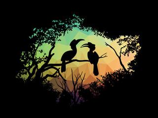 animal of wildlife (Hornbill in the forest)