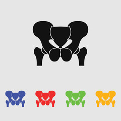 Anatomy Pelvis. Icon