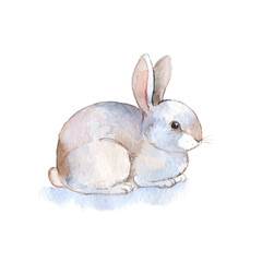 White rabbit 2. Watercolor illustration in vector. Hand-drawn illustration