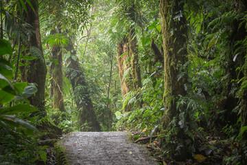 The jungle landscape